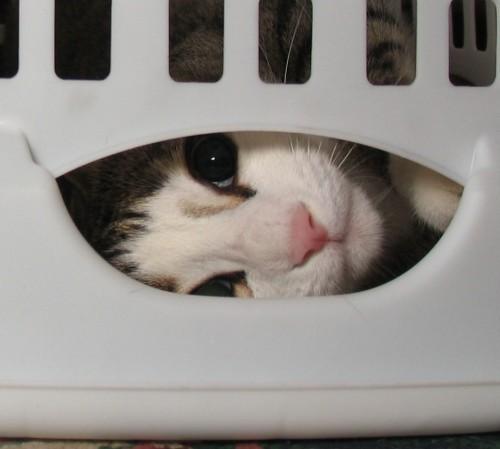 wallpaper cat in laundry basket