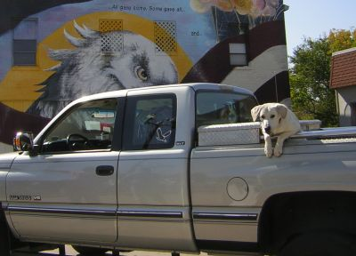 dog watching parade