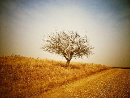 Flint Hills tree